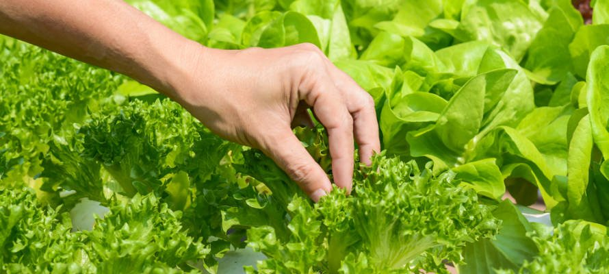 Plant your own crops! (Shutterstock)