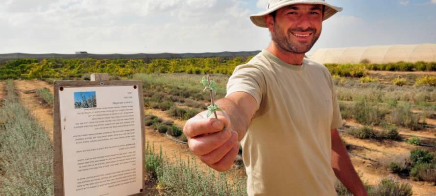 Israel Nigeria Farming