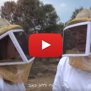 Israeli honey bees